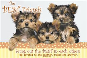 The Best Friends -